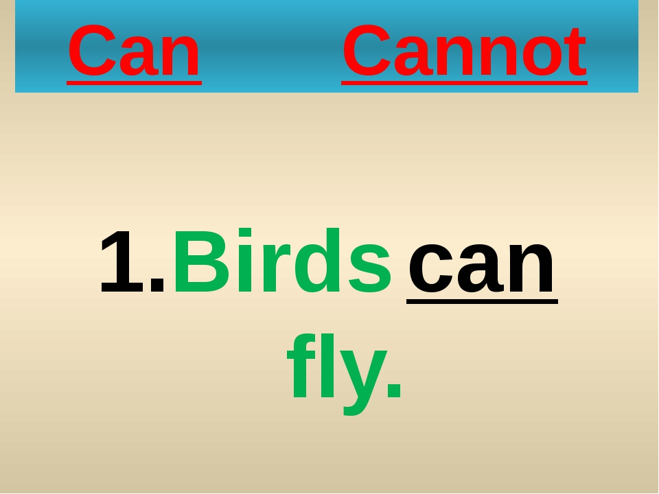 Can Cannot Birds can fly.
