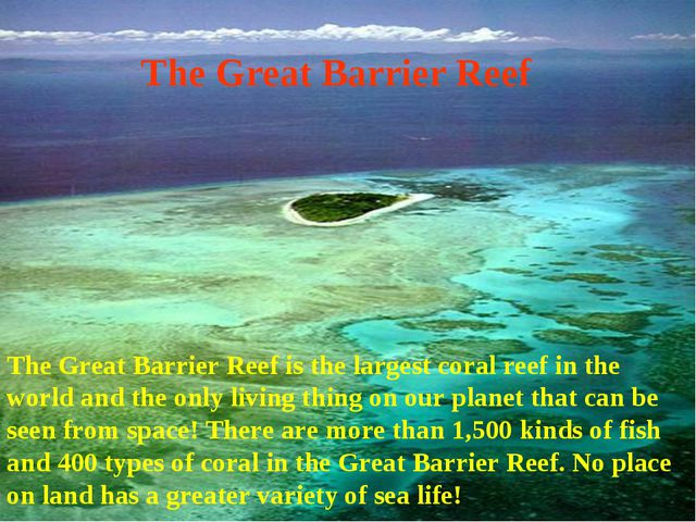 The Great Barrier Reef The Great Barrier Reef is the largest coral reef in th...