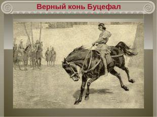 Верный конь Буцефал