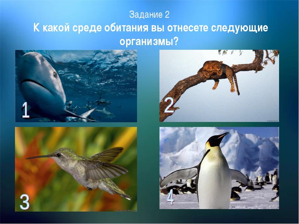 Задание 2 К какой среде обитания вы отнесете следующие организмы?