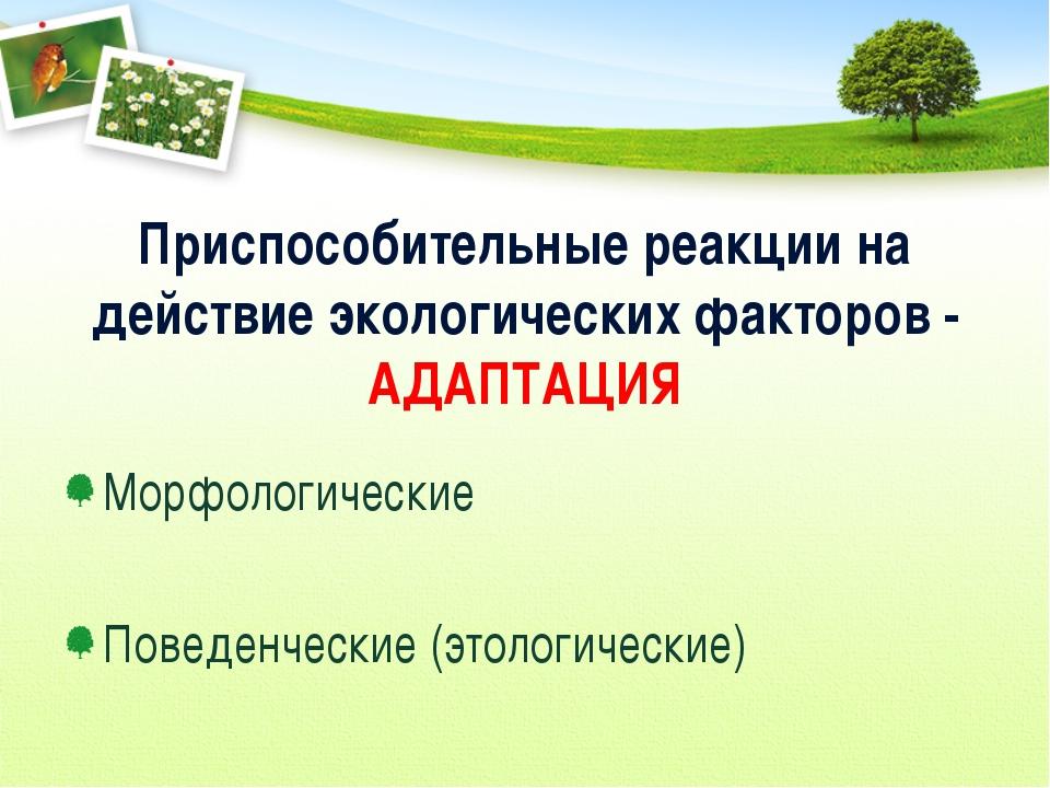 Приспособительные реакции на действие экологических факторов - АДАПТАЦИЯ Морф...