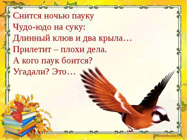 Снится ночью пауку Чудо-юдо на суку: Длинный клюв и два крыла… Прилетит – пло...