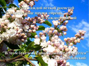 """""""…И в саду каждой веткой росистой Торжествующе пахнет сирень."""" В.Рождественск"""