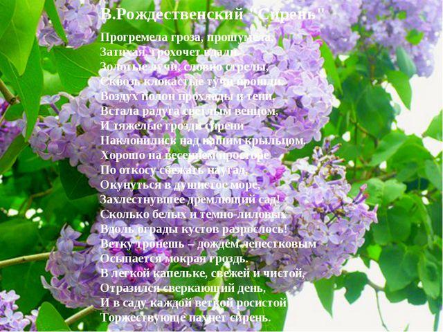 """В.Рождественский """"Сирень"""" Прогремела гроза, прошумела, Затихая, грохочет вдал..."""