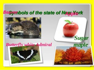 Symbols of the state of New York Beaver Butterfly white Admiral Sugar maple A