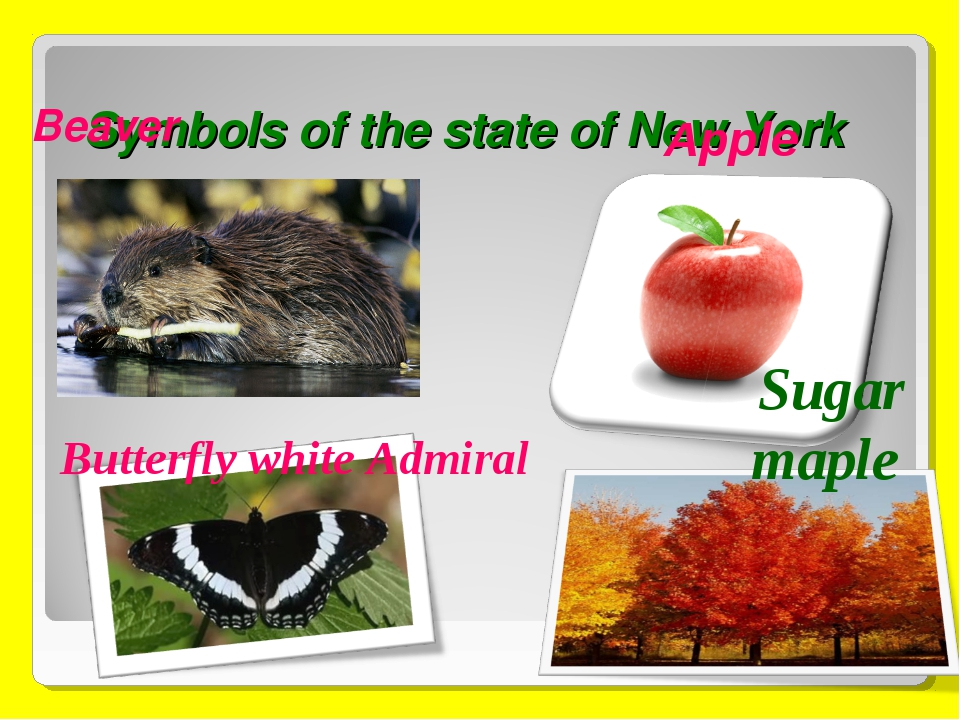 Symbols of the state of New York Beaver Butterfly white Admiral Sugar maple A...