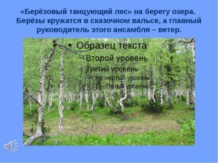 «Берёзовый танцующий лес» на берегу озера. Берёзы кружатся в сказочном вальсе
