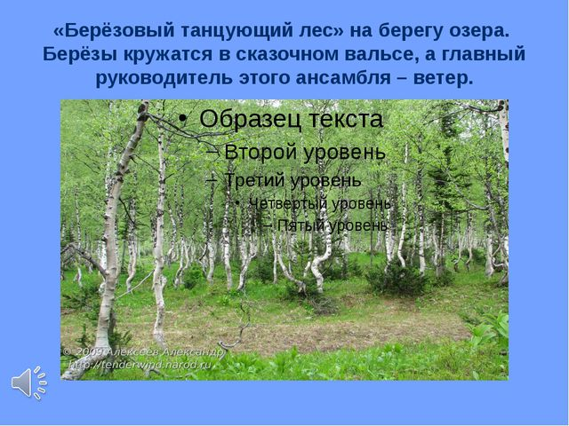 «Берёзовый танцующий лес» на берегу озера. Берёзы кружатся в сказочном вальсе...