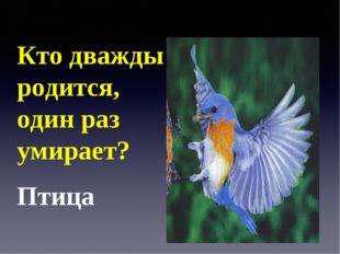 Кто дважды родится, один раз умирает? Птица