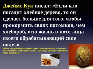 Джеймс Кук писал: «Если кто посадит хлебное дерево, то он сделает больше для