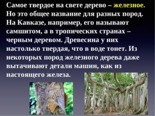 Самое твердое на свете дерево – железное. Но это общее название для разных по