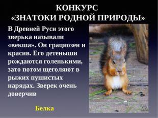 КОНКУРС «ЗНАТОКИ РОДНОЙ ПРИРОДЫ» В Древней Руси этого зверька называли «векша