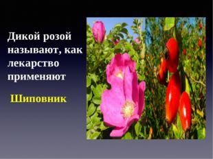 Дикой розой называют, как лекарство применяют Шиповник