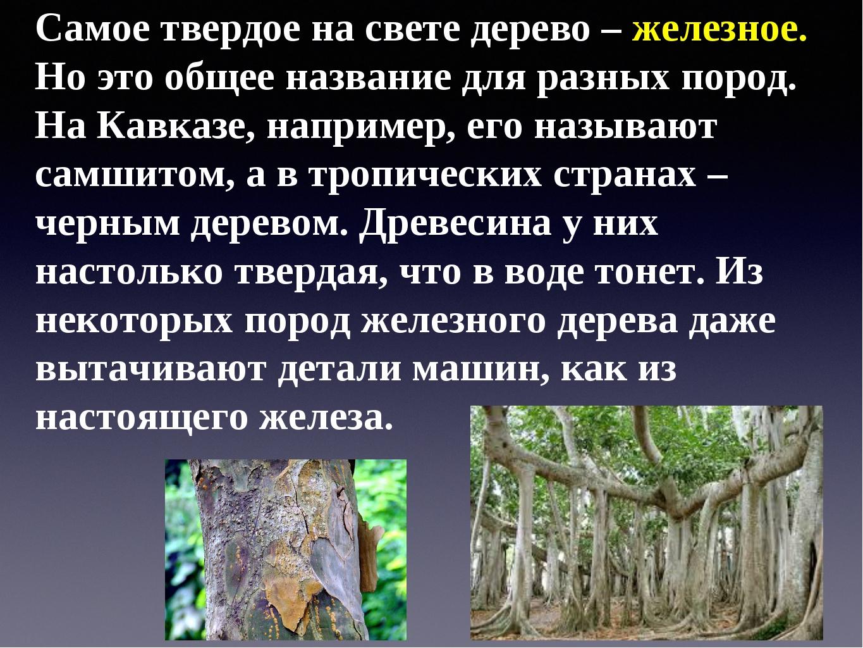 Самое твердое на свете дерево – железное. Но это общее название для разных по...