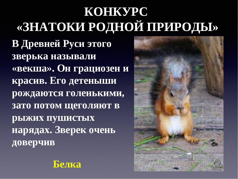 КОНКУРС «ЗНАТОКИ РОДНОЙ ПРИРОДЫ» В Древней Руси этого зверька называли «векша...