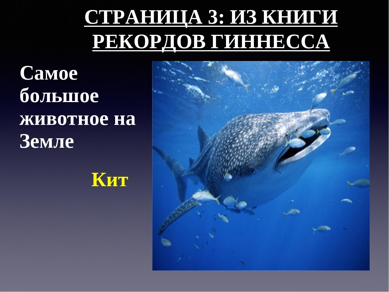 СТРАНИЦА 3: ИЗ КНИГИ РЕКОРДОВ ГИННЕССА Самое большое животное на Земле Кит