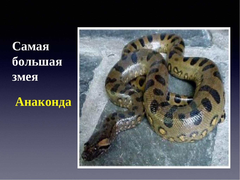 Самая большая змея Анаконда