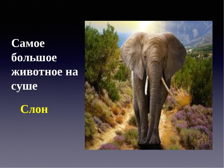 Самое большое животное на суше Слон