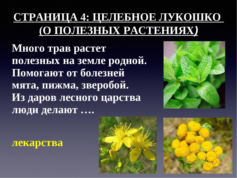 СТРАНИЦА 4: ЦЕЛЕБНОЕ ЛУКОШКО (О ПОЛЕЗНЫХ РАСТЕНИЯХ) Много трав растет полезны...
