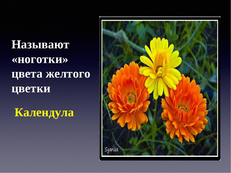 Называют «ноготки» цвета желтого цветки Календула