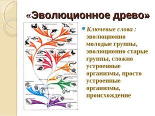 «Эволюционное древо» Ключевые слова : эволюционно молодые группы, эволюционно