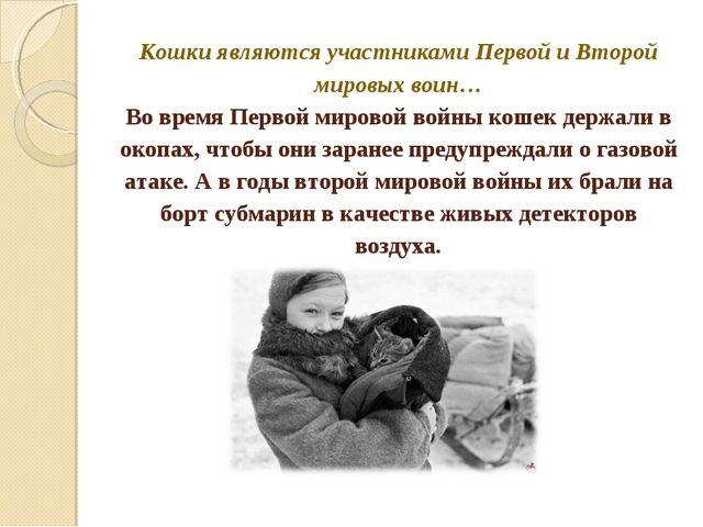 Кошки являются участниками Первой и Второй мировых воин… Во время Первой мир...