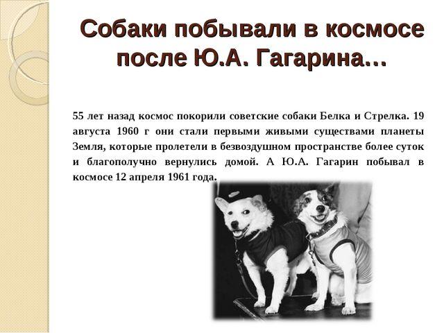 Собаки побывали в космосе после Ю.А. Гагарина… 55 лет назад космос покорили с...