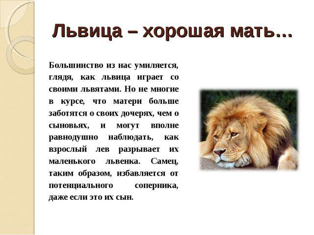 Львица – хорошая мать… Большинство из нас умиляется, глядя, как львица играет...
