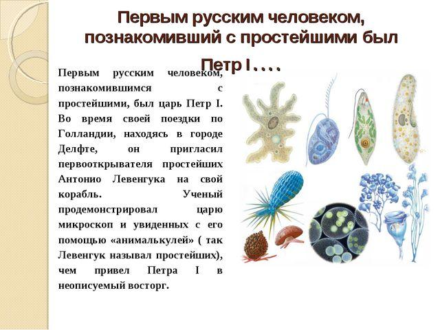 Первым русским человеком, познакомивший с простейшими был Петр I…. Первым рус...