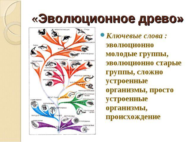 «Эволюционное древо» Ключевые слова : эволюционно молодые группы, эволюционно...
