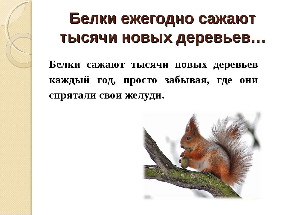 Белки ежегодно сажают тысячи новых деревьев… Белки сажают тысячи новых деревь...