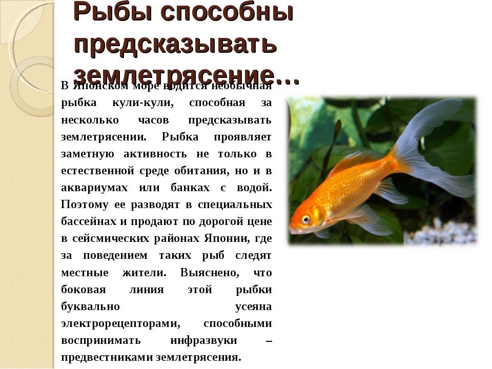 Рыбы способны предсказывать землетрясение… В Японском море водится необычная...