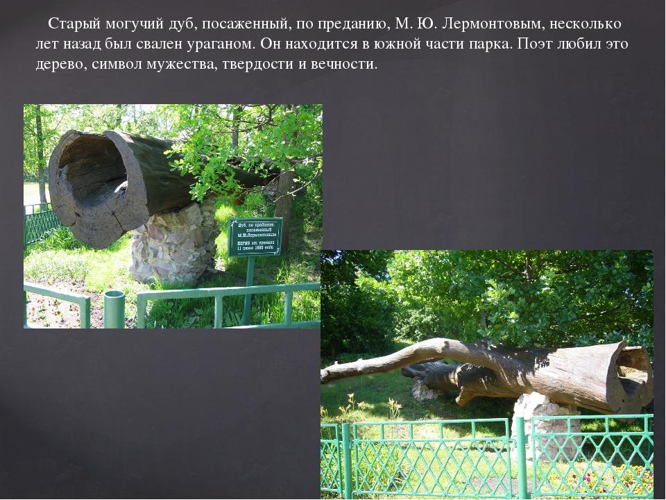 Старый могучий дуб, посаженный, по преданию, М. Ю. Лермонтовым, несколько ле...