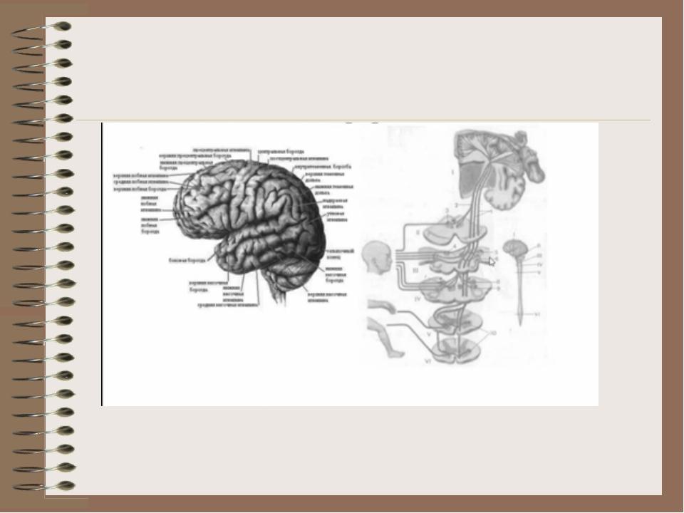 Мозжечковая дизартрия картинки