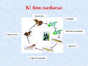 Ересек бақа уылдырық ұрықтанған уылдырық құйрықты бақа Көбею сызбасы:: Дернәс