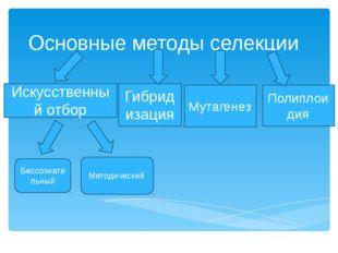 Основные методы селекции . Искусственный отбор Гибридизация Бессознательный М