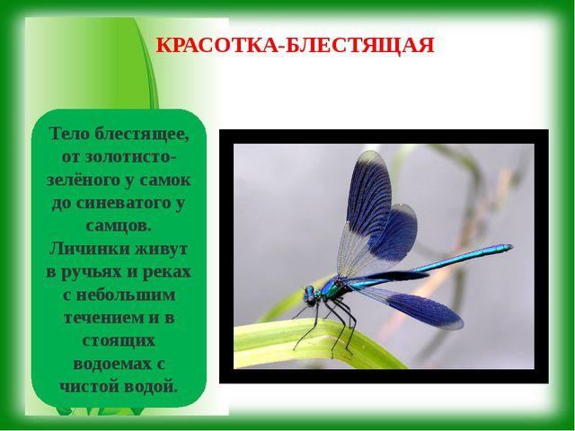 Тело блестящее, от золотисто-зелёного у самок до синеватого у самцов. Личинки...