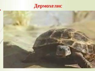 Дермохелис