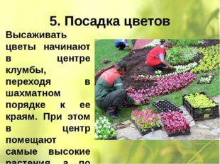 5. Посадка цветов Высаживать цветы начинают в центре клумбы, переходя в шахма
