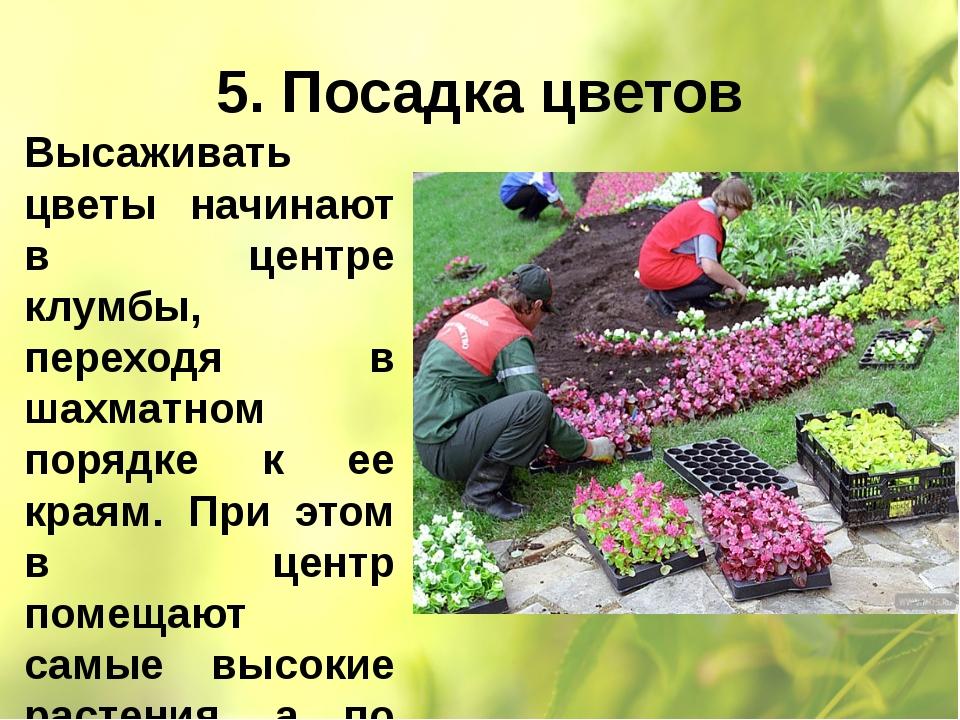 5. Посадка цветов Высаживать цветы начинают в центре клумбы, переходя в шахма...