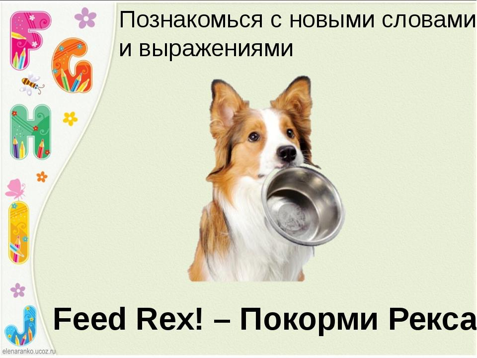 Feed Rex! – Покорми Рекса! Познакомься с новыми словами и выражениями