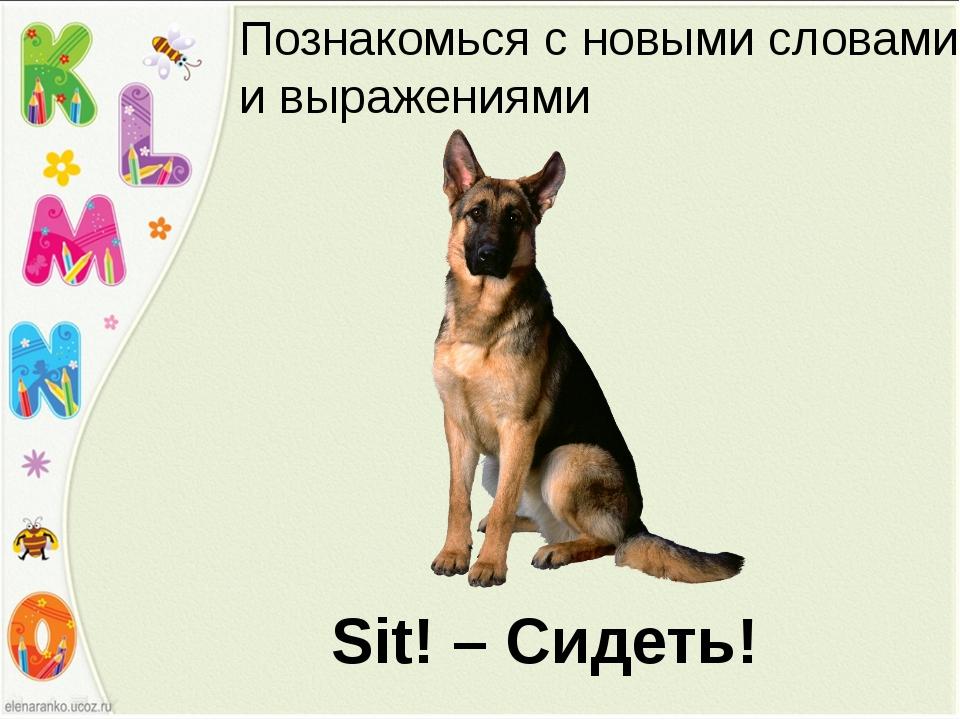 Sit! – Сидеть! Познакомься с новыми словами и выражениями