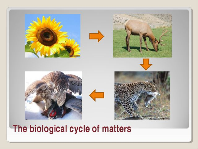 The biological cycle of matters