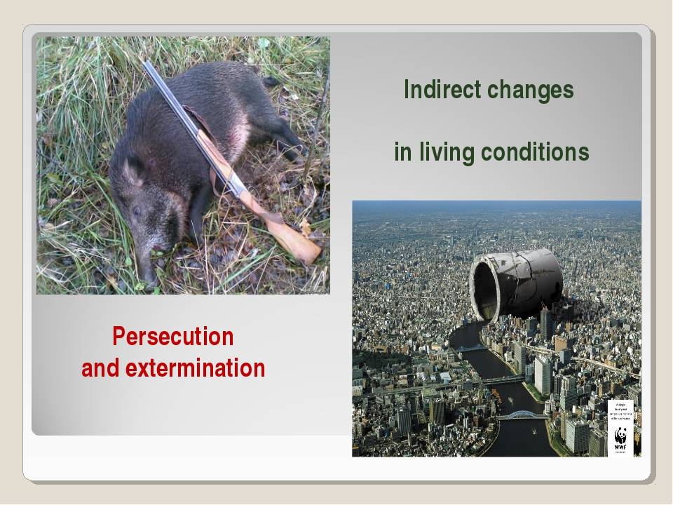 Persecution and extermination Indirect changes in living conditions