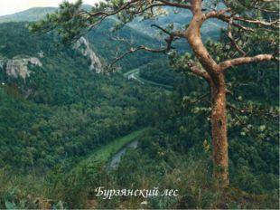 Бурзянский лес