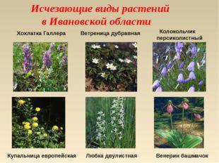 Исчезающие виды растений в Ивановской области Хохлатка Галлера Ветреница дуб