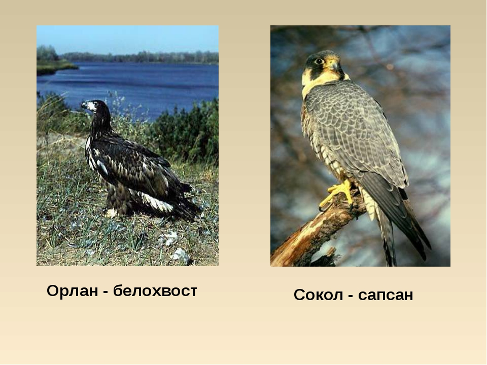 Животные ивановской области фото и описание конкретно