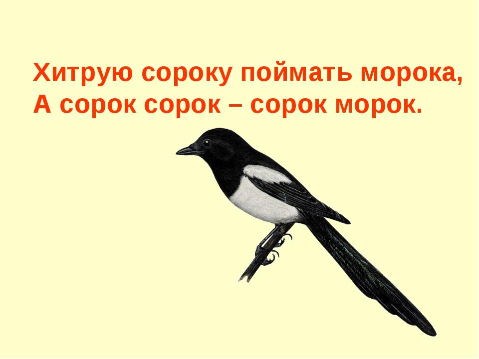 Хитрую сороку поймать морока, А сорок сорок – сорок морок.