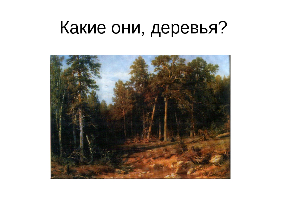 Какие они, деревья?