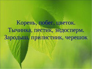 Корень, побег, цветок. Тычинка, пестик, эндосперм. Зародыш, прилистник, череш